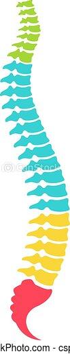 anatomisk, ryggrads, modell, kolonn - csp84124373