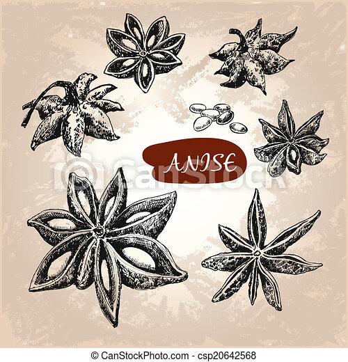 anise. - csp20642568