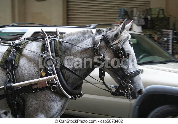 Bilhäst