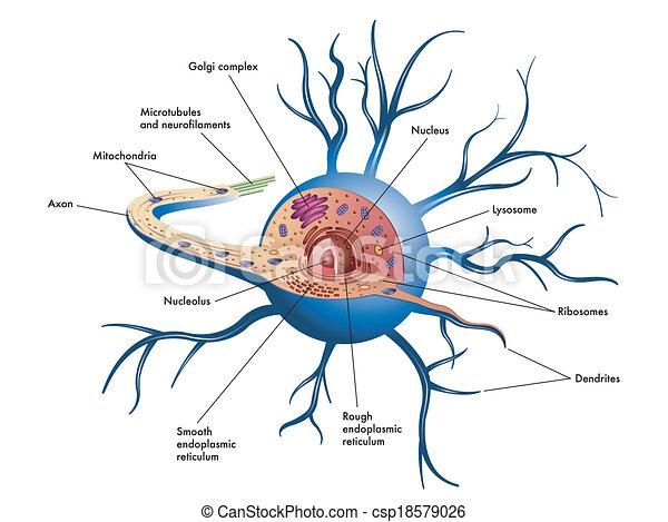cell, nerv - csp18579026