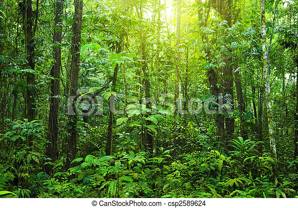 forest., tät - csp2589624