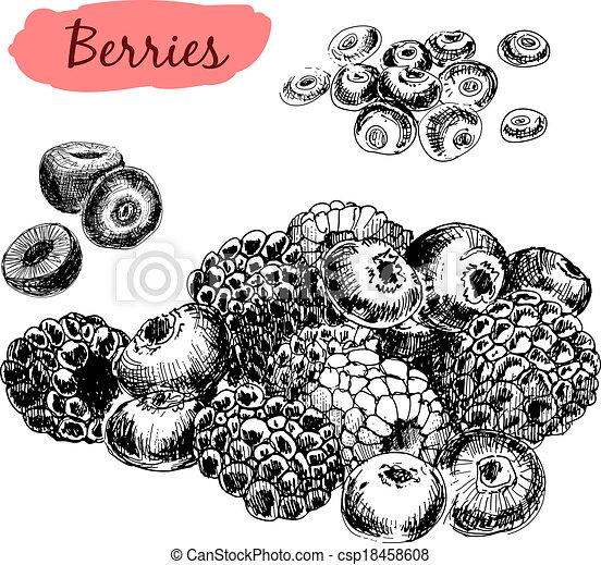 illustrationer, berries., sätta - csp18458608