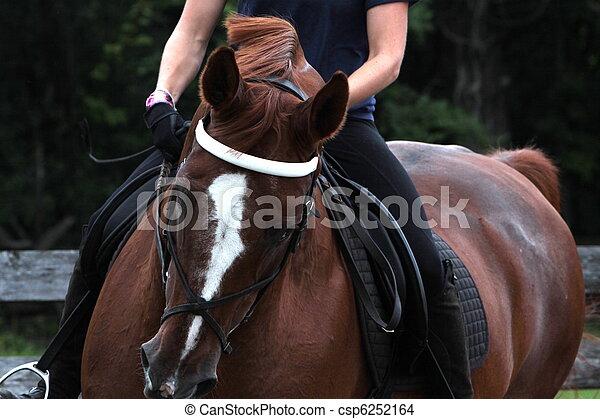 stående, häst, dressyr - csp6252164
