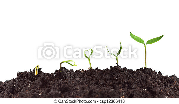 växt, tillväxt, groning - csp12386418